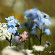 Fleurs des Pyrénées Année 2010