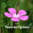 Fleurs des Pyrénées 2010